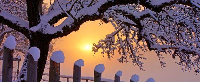 fence-winter-christmast-snow-dawn-pure-top-best-picture-desktop