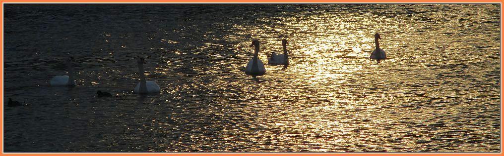 V globinah zime sem se končno naučil, da je v meni nevidno poletje. /Albert Camus