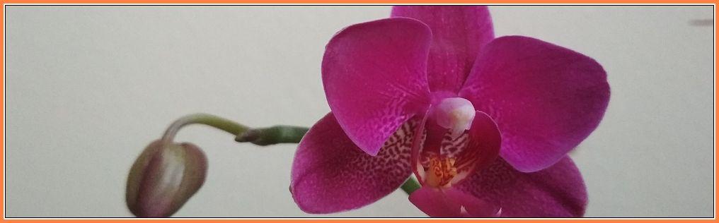 Bodimo hvaležni za ljudi, ki nas osrečujejo. So očarljivi vrtnarji, ki pomagajo naši duši cveteti./Marcel Proust